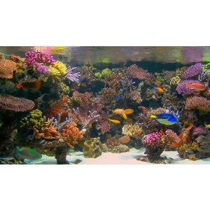 DVD Aquarium Barrier Reef
